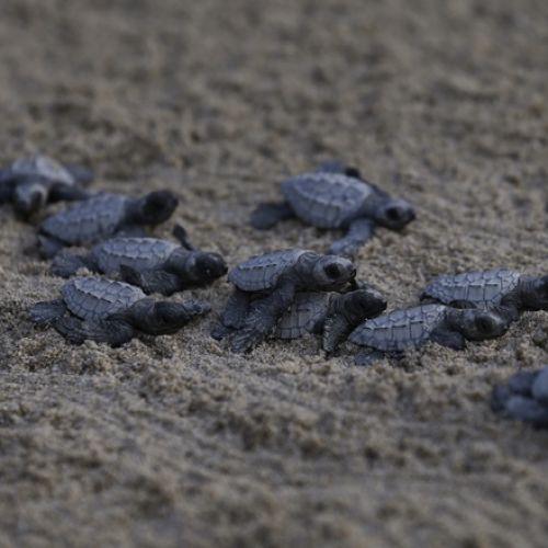 Μικρά χελωνάκια