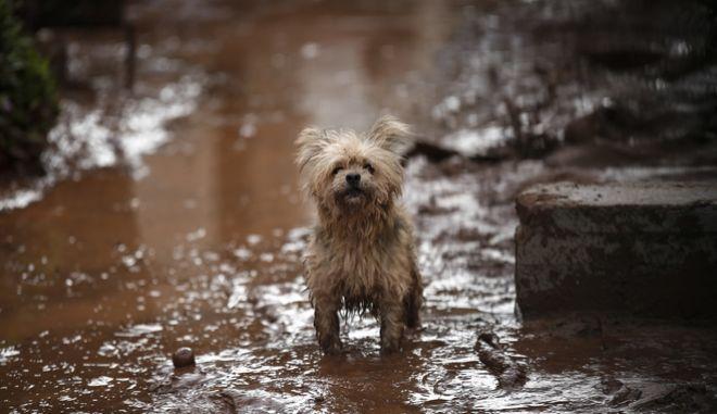 Αδέσποτο σκυλάκι  (EUROKINISSI / Στέλιος Μισίνας)