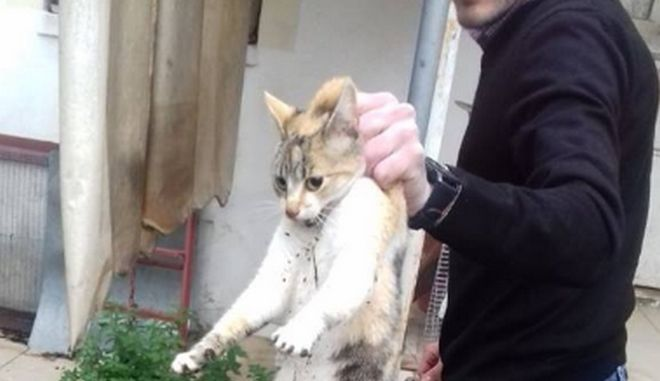 Φρίκη στην Καρδίτσα: Παγίδεψε γάτα σε κλουβί και την χτύπησε με ψαροντούφεκο
