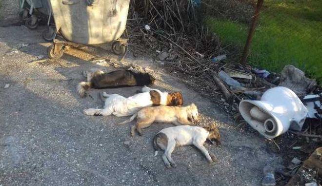 Εικόνες φρίκης στη Ζαχάρω - Δηλητηρίασαν τέσσερα αδέσποτα