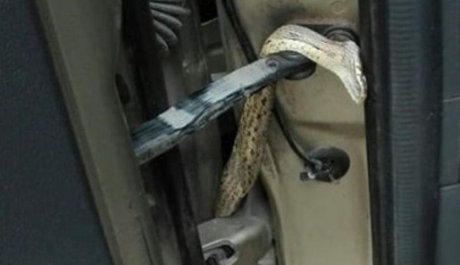 """Κρήτη: Ο """"λαθρεπιβάτης"""" σε αυτοκίνητο, ήταν φίδι"""