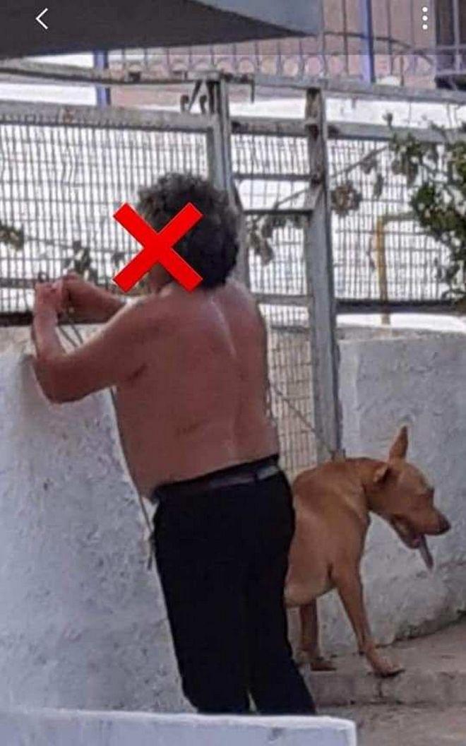 Χανιά: Σώθηκε ο σκύλος που κακοποιήθηκε βάναυσα - Αγνοείται ο ιδιοκτήτης του