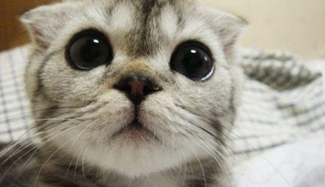 Γιατί μας αρέσει να βλέπουμε βίντεο με πρωταγωνίστριες γάτες