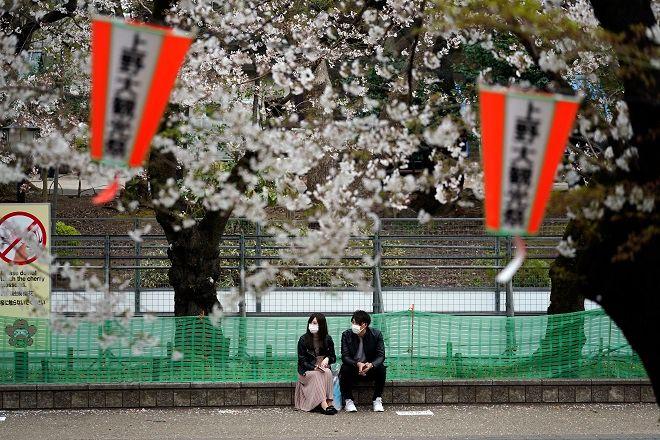 Οι ανθισμένες κερασιές στην Ιαπωνία εντυπωσιάζουν παρά την εξάπλωση του κορονοϊού