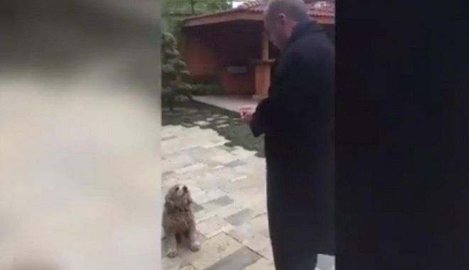 Βίντεο: Ο Ερντογάν ταΐζει ένα σκύλο αγγούρι και γίνεται viral