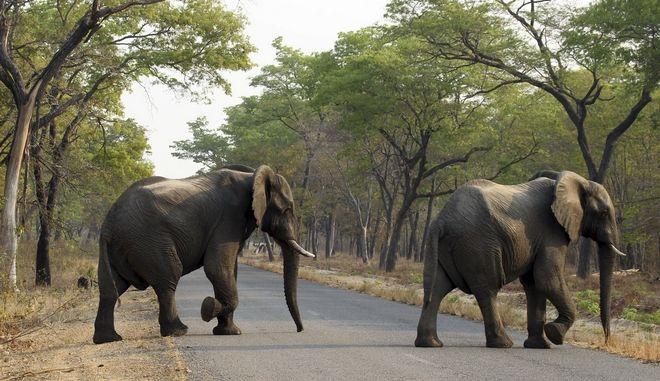 Ελέφαντες στη Ζιμπάμπουε