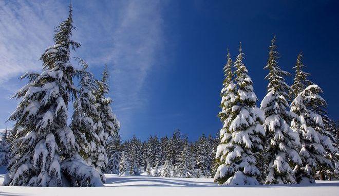 Χιονισμένο δάσος