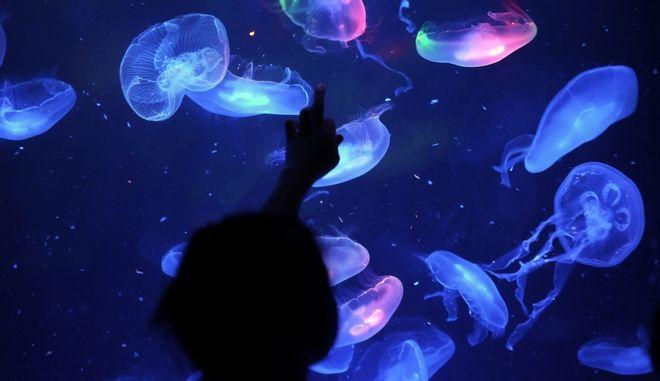 Μέδουσες σε aquarium της Σαγκάης