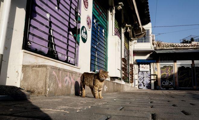 Γάτα στο άδειο κέντρο της Αθήνας