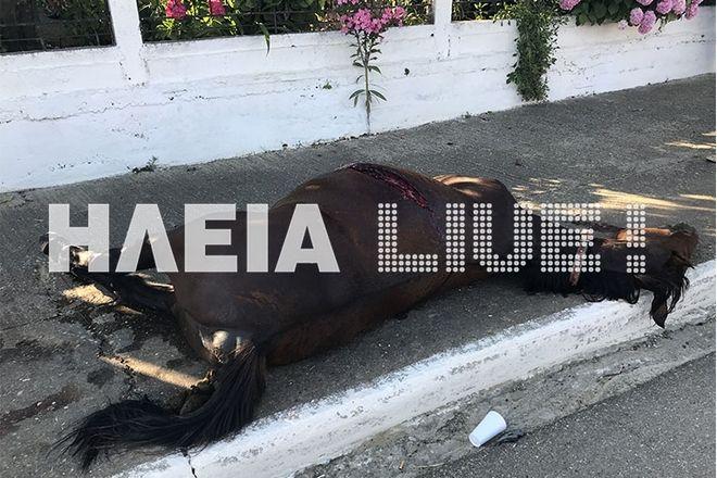 Ηλεία: Σοβαρό τροχαίο με άλογο - Τραυματίας η έγκυος οδηγός