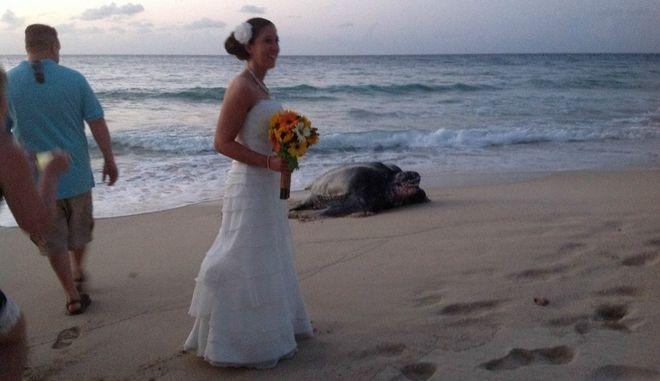Φωτογραφίες: Μια σπάνια γιγαντιαία θαλάσσια χελώνα πήγε απρόσκλητη σε... γάμο