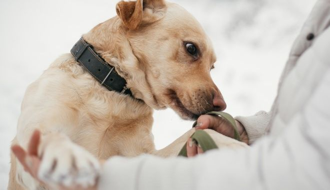 Σκύλος μυρίζει έναν άντρα (φωτογραφία αρχείου)