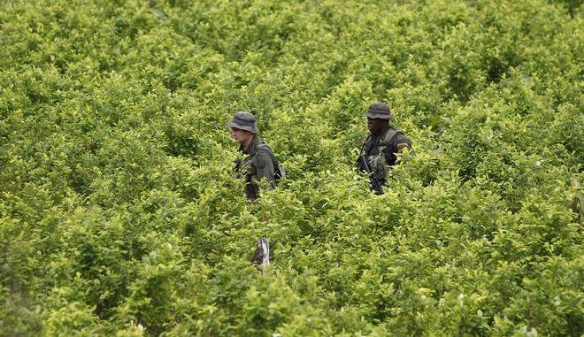 Διπλασιάστηκαν οι καλλιέργειες κόκας στην Κολομβία