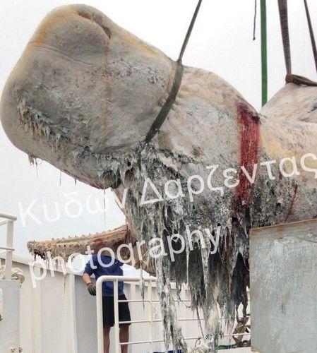 μέσα στο στομάχι της φάλαινας υπήρχαν πάνω από 30 κιλά πλαστικής σακούλας