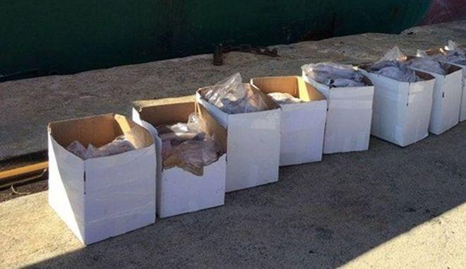 Κατάσχεσαν εκατοντάδες κιλά μπακαλιάρου και τα έδωσαν σε ιδρύματα