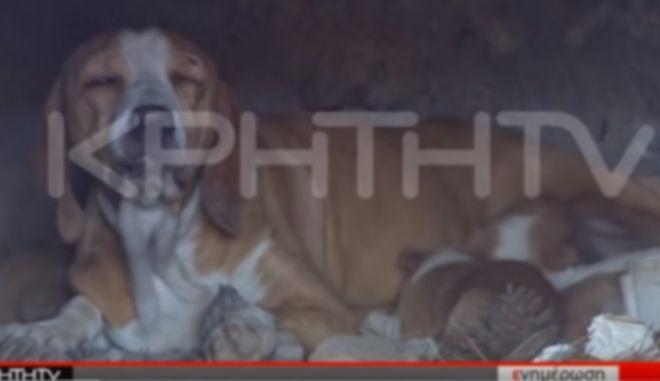 Απίστευτη κτηνωδία στην Κρήτη: Έκλεισαν κουτάβια μέσα σε φούρνο και έβαλαν φωτιά