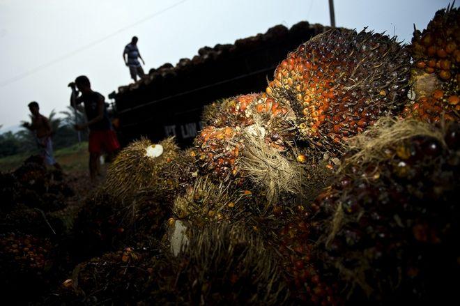 Arbeiter laden Palmlfrchte auf einen LKW, Langkat, Nord Sumatra, Indonesien.