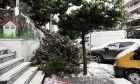"""Πτώση δέντρου σε περιοχή της Αθήνας από τη σφοδρότητα της κακοκαιρίας """"Μήδεια"""""""