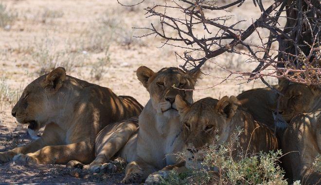 'Απειλείται η ανθρώπινη ζωή': Σε εξέλιξη ο έκτος μαζικός αφανισμός ειδών