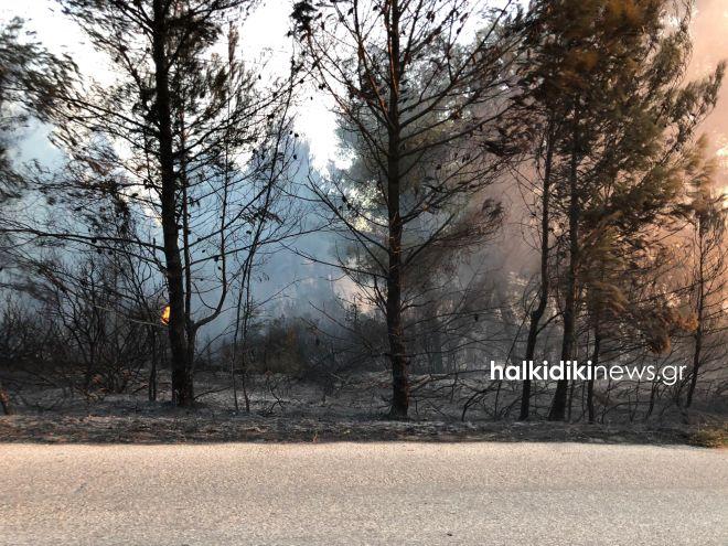 Μεγάλη φωτιά στη Σιθωνία Χαλκιδικής - Προληπτική εκκένωση οικισμού