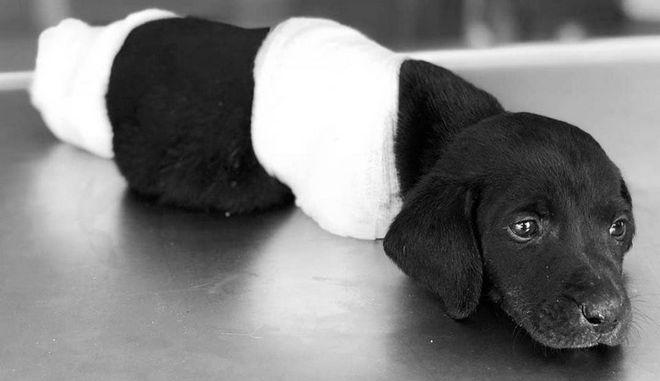 Το κουτάβι βρέθηκε να αγωνίζεται για να ζήσει