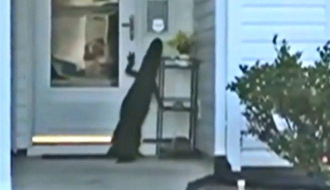 Νότια Καρολίνα: Αλιγάτορας προσπάθησε να ανοίξει πόρτα σπιτιού