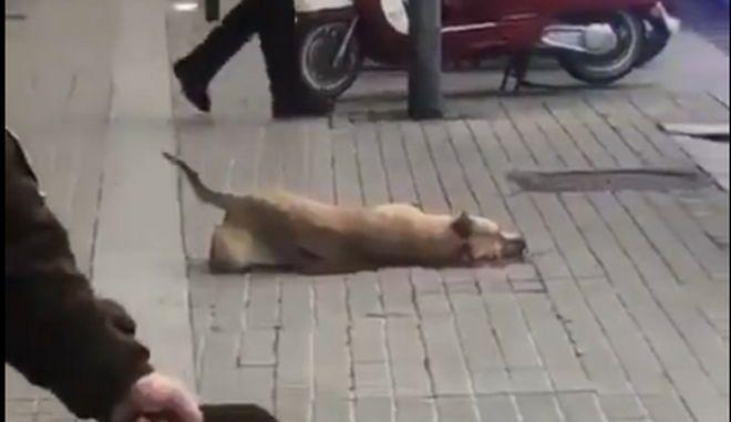 Οργή στη Βαρκελώνη: Αστυνομικοί συνέλαβαν άστεγο αφού σκότωσαν τον σκύλο του