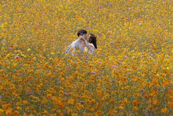 A couple kisses as they make a selfie photo in a field of cosmos flowers at Olympic Park in Seoul, South Korea, Wednesday, Sept. 21, 2016. (AP Photo/Ahn Young-joon)