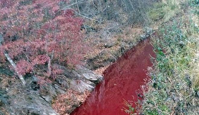 """Νότια Κορέα: Κόκκινος """"βάφτηκε"""" ποταμός από το αίμα χιλιάδων χοίρων"""