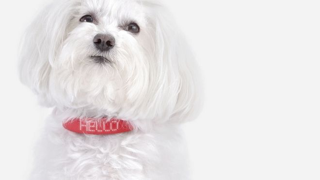 Αυτό το κολάρο είναι έξυπνο, καταλαβαίνει τον σκύλο σου και είναι ελληνικό