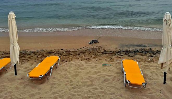 Καβάλα: Νεκρές δύο θαλάσσιες χελώνες σε παραλίες