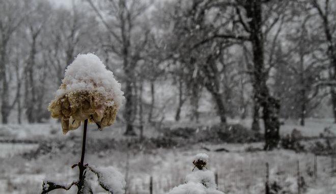 Χιονισμένο τοπίο στην Ηλεία.