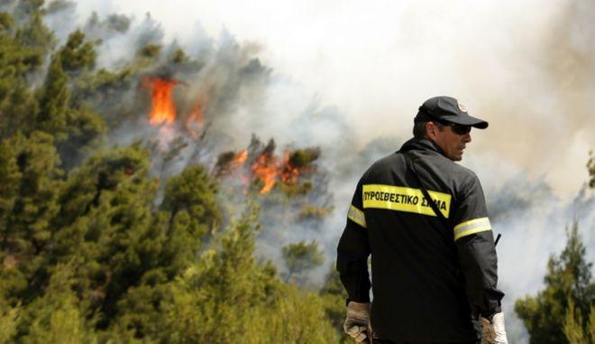 Φωτιά σε δασική έκταση, Αρχείο