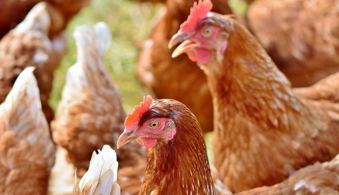 Σύστημα έγκαιρης προειδοποίησης για τα τρόφιμα και τις ζωοτροφές
