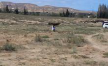 Αετός επιτίθεται σε 8χρονο κορίτσι