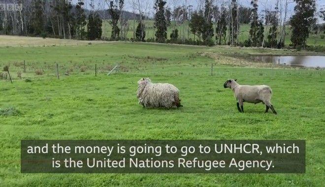 Πρόβατο βρέθηκε μετά από επτά χρόνια σε καθεστώς αυτοαπομόνωσης!