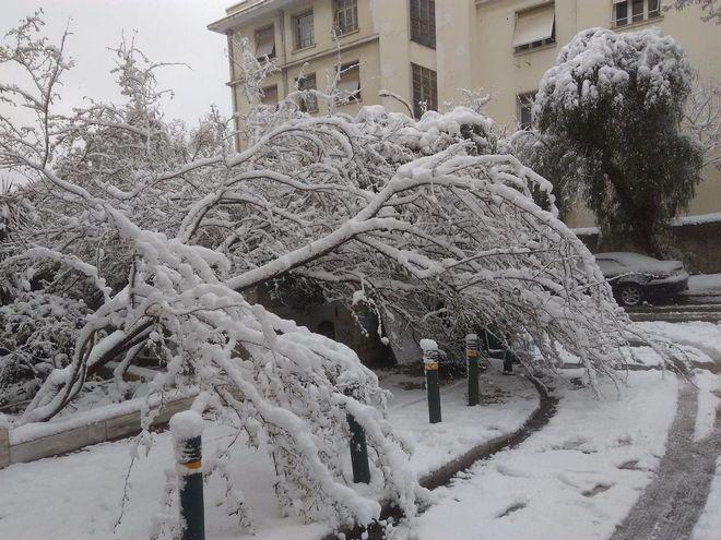 Δέντρα έπεσαν στον Ευαγγελισμό
