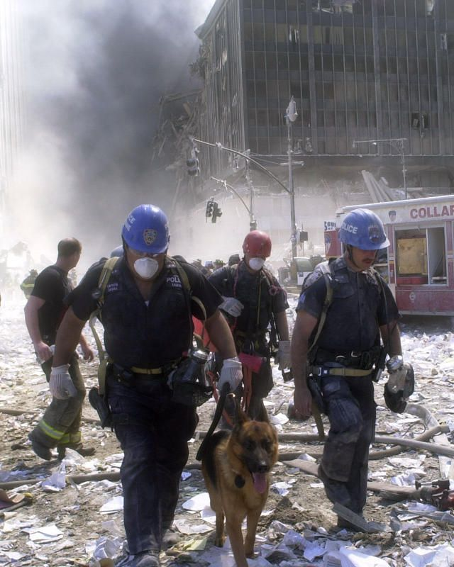 Rescue workers search for survivors following the terrorist attack on the World Trade Center. A hijacked American Airlines Boeing 767, originating from Boston's Logan Airport, struck 1 World Trade Center (north tower) at 8:45 a.m. At 9:03 a.m., a United Airlines 767, also hijacked in Boston, crashed into 2 World Trade Center (south tower). Both towers later collapsed.  dog debris rubble collapse