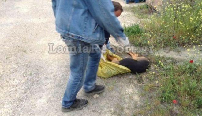Την άμεση κινητοποίηση της Εισαγγελίας Πρωτοδικών, προκάλεσε το δημοσίευμα του LamiaReport με την καταγγελία για δολοφονίες ζώων σε Δήμο της Φθιώτιδας