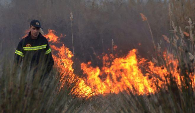 Πυρκαγιά σε δάσος της Καρίτσας στη Λάρισα