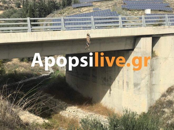 Φρίκη στην Κρήτη: Κρέμασαν σκύλο σε γέφυρα στη Μεσαρά
