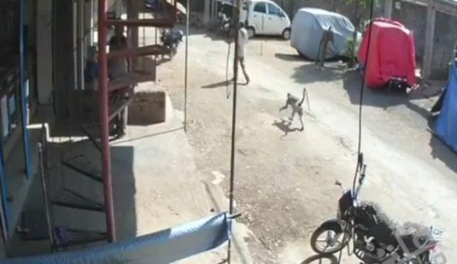 Βίντεο: Μαϊμού βγάζει νοκ άουτ περαστικό