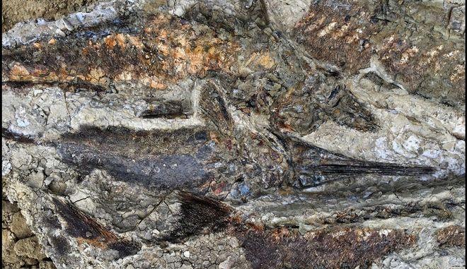 """Απολιθώματα από τη μέρα της """"Αποκάλυψης"""" πριν 66 εκατ. χρόνια"""