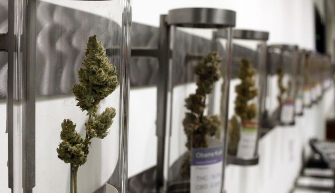Cannabis is on display at Shango Premium Cannabis, in Portland, Ore., Wednesday, Sept. 30, 2015.  Oregon marijuana stores have begun sales to recreational users, marking a big day for the budding pot industry in the state. Some of the more than 250 dispensaries in Oregon that already offer medical marijuana opened their doors early Thursday to begin selling the drug just moments after it became legal to do so. (AP Photo/Timothy J. Gonzalez)