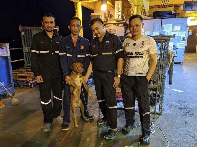 Ο σκύλος που βρέθηκε να κολυμπάει σε απόσταση 200χλμ από την ακτή