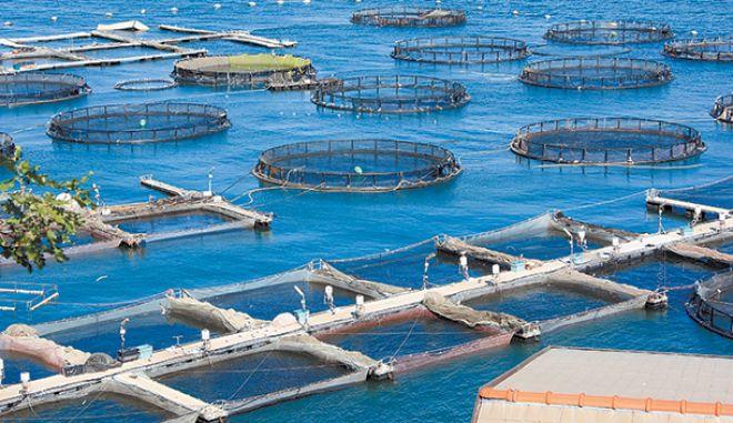 Τον Νοέμβριο του 2019 ολοκληρώνεται το χωροταξικό για τις υδατοκαλλιέργειες