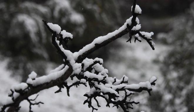 Χιόνια στην Αργολίδα τον Ιανουάριο του 2021
