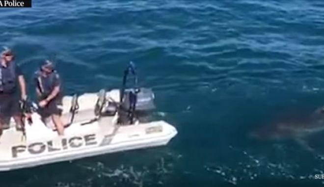 Μεγάλος λευκός καρχαρίας διακόπτει αστυνομική επιχείρηση