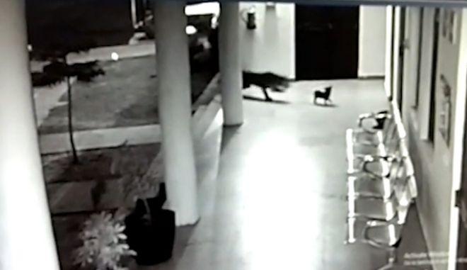 Συγκλονιστικό: Σκύλος υπερασπίζεται το κουτάβι του από μια λεοπάρδαλη