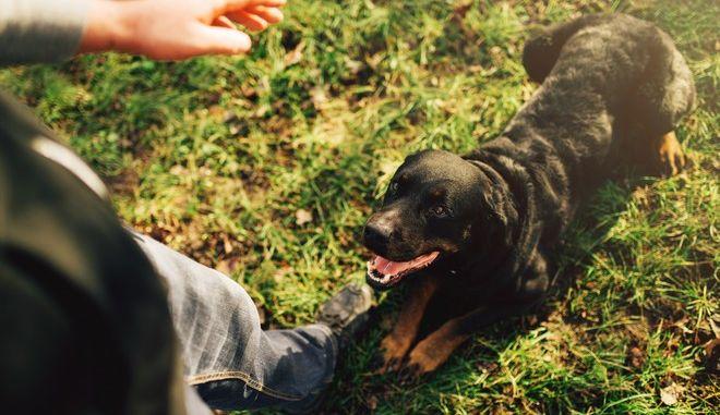 Σκύλος κατά τη διάρκεια εκπαίδευσης